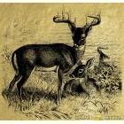 Картина из сусального золота - Белохвостый олень
