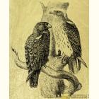 Золотая картина  хищные птицы