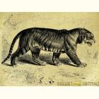 Золотая картина Тигр