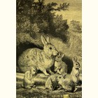 Золотая картина Гравюра Кролики